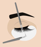 Procedimento para a extensão da pestana A pinça mestra adiciona as pestanas falsas ou falsificadas ao cliente Fotografia de Stock