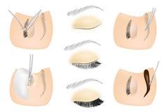 Procedure for eyelash extensions, eyelashes lamination. Eyelash and eyebriw cosmetic Procedures: Staining, Curling, Laminating, royalty free illustration