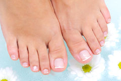 Procedure in the water of beauty female feet Stock Images