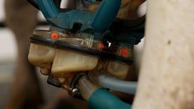 Proces automatyczny dój krowy z nowożytnym wyposażeniem, zakończenie, rolnictwo, przemysł, dój, krowa zdjęcie wideo