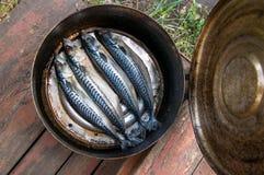 Proces die gerookte vissen koken royalty-vrije stock fotografie