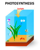 Proces fotosynteza w algach Obraz Royalty Free
