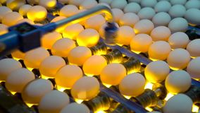 Proces om embryo's binnen eieren met eimeetapparaat te controleren Langzame Motie stock footage