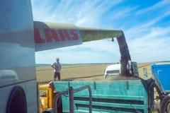Proces zbiera żniwiarzami gwałt rośliny w żniwiarkach Ciężarowy rozładunek Zdjęcie Royalty Free