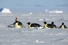 Procesión antártica de la Navidad Fotografía de archivo libre de regalías