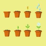 Proceso de crecer la flor de la semilla Imágenes de archivo libres de regalías