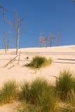 Proceso de la desertificación fotos de archivo libres de regalías