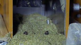 Proceso de la infusión de hierbas del corte almacen de video