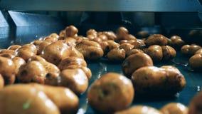 Proceso de la limpieza de la patata en una fábrica de la producción alimentaria metrajes