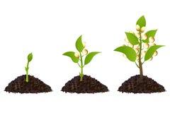 Proceso de la vida vegetal de dinero stock de ilustración