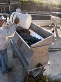 Proceso de las uvas para wine Foto de archivo