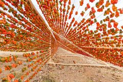 Proceso de sequía de la pimienta tradicional en Gaziantep, Turquía imagen de archivo libre de regalías