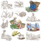 Proceso del té Agricultura Un ejemplo dibujado mano Imagen de archivo