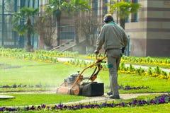 process av gräsmatta som mejar, begrepp av att meja gräsmattan, gräsklippareklippgräs med att arbeta i trädgården hjälpmedel royaltyfria bilder
