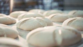 Process of baking breads in 4K. Process of baking breads in bakery in 4K stock footage