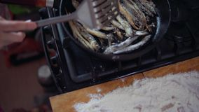 The process of cooking a small fish, preparing for frying in oil in a frying pan. The process of cooking a small silver fish, the girl fry capelin in oil in a stock footage
