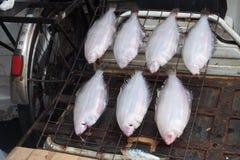 On process Dried flatfish Stock Images