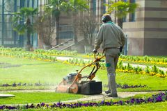 Process of lawn mowing, concept of mowing the lawn, lawnmower cutting grass with gardening tools.. royalty free stock images