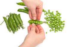 Process of manual cleaning of green peas on white background Royalty Free Stock Images
