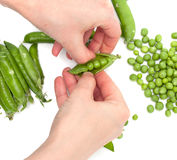 Process of manual cleaning of green peas on white background Stock Photo