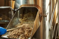 Process of mashing of milled malt grains. Mashing of milled malt grains for preparing malt. Process of brewing grain of barley stock images