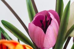 Process och befruktning för pollination för visning för konstgjorda blommor Royaltyfri Fotografi