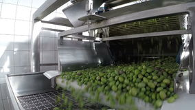 The process of olive cleaning in a modern oil mill