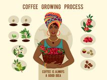 Process of planting and growing a coffee tree poster. Coffee growing process. African woman is a coffee farmer with a basket of coffee berries on the coffee farm stock illustration