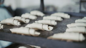 Process of putting croissants on baking tray 4K.  stock video