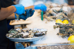 Process of shucking oysters Royalty Free Stock Photo