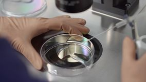 Process of in vitro fertilization in laboratory. Doctor in brown latex gloves is doing control check of the in vitro fertilization process inside Petri Dish with stock video footage