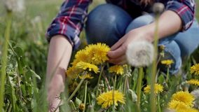 Process of weaving dandelion wreath. Woman hands making a yellow wreath from fresh wildflowers. Close up. 4k stock video
