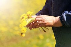 The process of weaving a wreath. Female hands weave a wreath of yellow dandelions. stock image