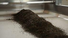 Processamento das folhas de chá pretas secas, bebida tradicional, produto para a exportação filme