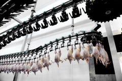 Processamento de carne das aves domésticas Foto de Stock