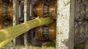 Processamento de um cana-de-açúcar cru Produção de açúcar video estoque