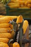 Processamento tradicional do milho Fotografia de Stock