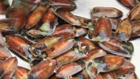 Processando mexilhões do mar para o alimento vídeos de arquivo