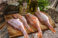 Processed carcasses of red grouper with herbs and spices Stock Photo