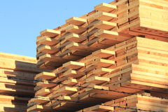 Processed Lumber in Lumberyard Royalty Free Stock Photo