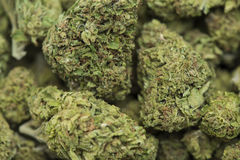 Processed medical marijuana Stock Images