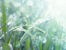 Processed photo of grass and rays of the rising sun Royalty Free Stock Image