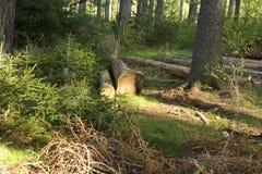 Processed trees Stock Photo