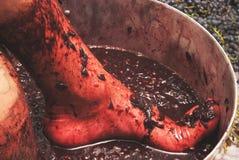 Processen av danandevin, druvor trycker på deras fot i en stor vat Hemligheter av winemaking, förberedelsen av druvor och fruktsa arkivbilder