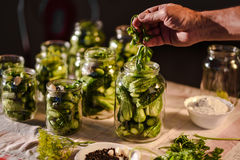 Processen av förberedelsen av salta gurkor för på burk, Ukraina Arkivfoton