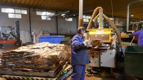 Cork factory in Sao Bras de Alportel, Algarve, Portugal, March 14, 2018. Processing of cork boards and manual quality control. Unidentified persons royalty free stock images