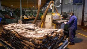 Cork factory in Sao Bras de Alportel , Algarve, Portugal, March 14, 2018. Processing of cork boards and manual quality control. Unidentified persons stock images