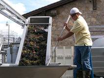 Processing grapes to wine Stock Image