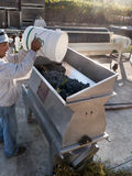 Processing grapes to wine Stock Photo