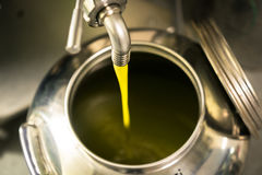 Processing of olive oil in a modern farm. Stock Image
